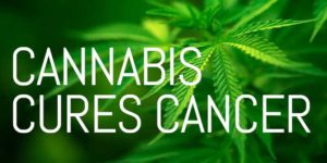 cannabis oil cure cancer